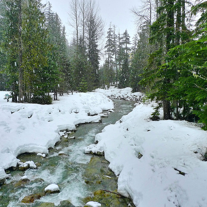Snow-covered stream bank